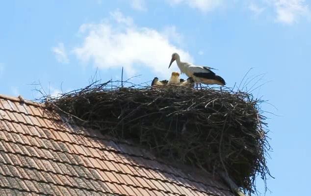 iyi çatı